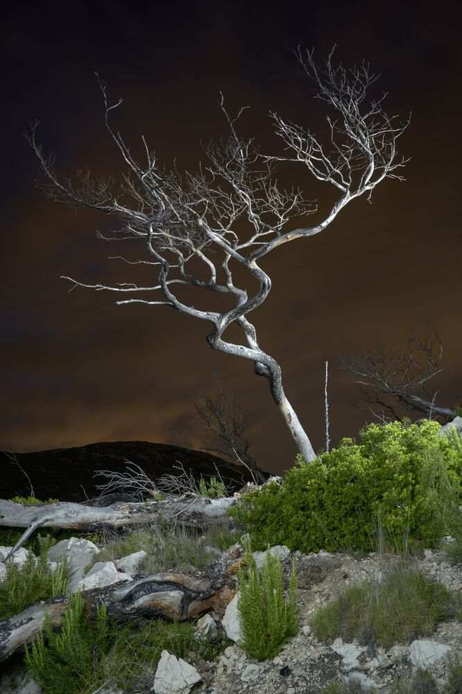 Francuski fotograf Charles Xelot zdobył pierwsze miejsce w kategorii Changing Forests dzięki swojemu zdjęciu Martwego Drzewa