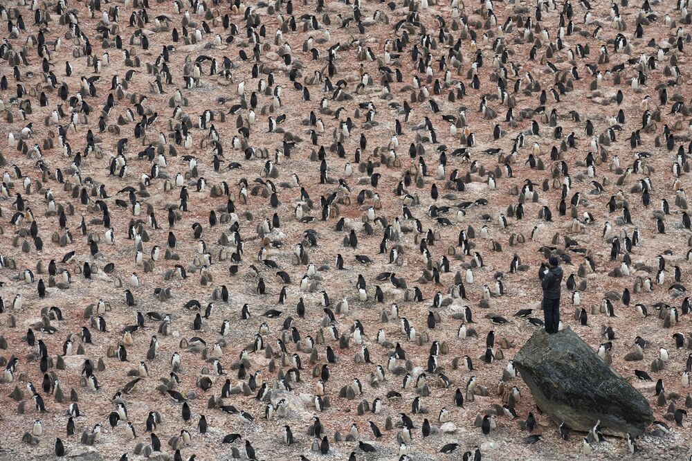 Pingwiny na Antarktydzie autorstwa szwedzkiego fotografa Christiana Åslunda