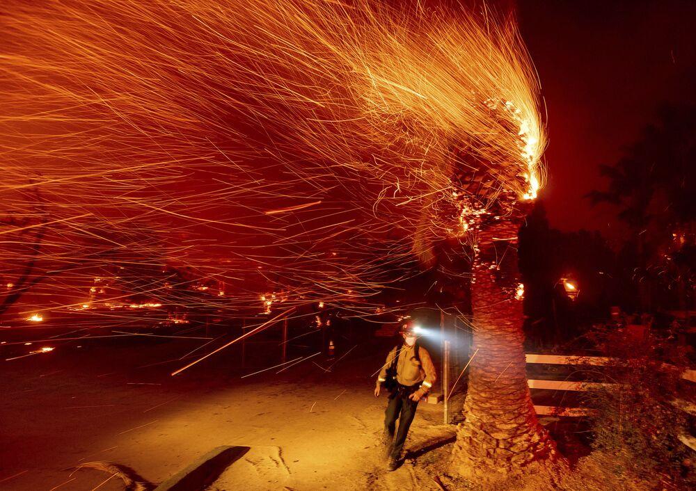 Strażak przechodzi obok płonącego drzewa, gasząc pożar w Kalifornii