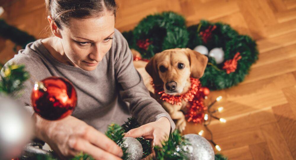 Jak prawidłowo ubrać choinkę, jeśli w domu jest pies