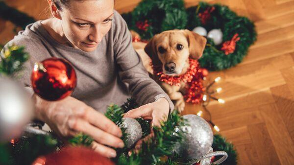 Jak prawidłowo ubrać choinkę, jeśli w domu jest pies - Sputnik Polska