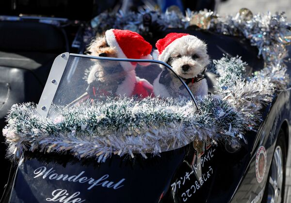 Psy w kostiumach Świętego Mikołaja siedzą na siedzeniu pasażera motocykla Harley Davidson podczas bożonarodzeniowej parady w Tokio - Sputnik Polska