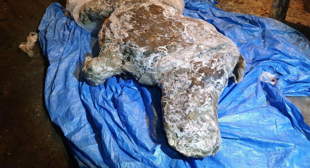 Szczątki włochatego nosorożca, Jakucja
