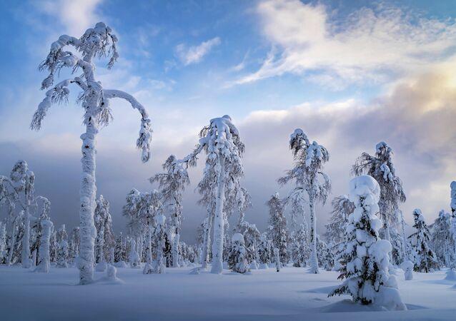 Sergiej Meżin - Uralskie palmy