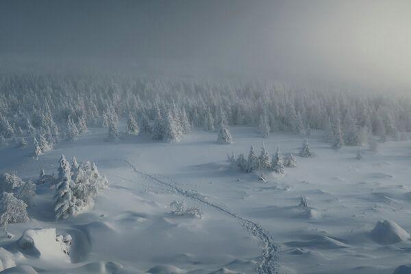 Ewgenija Golubenets: Droga do królestwa drzew noworocznych, obwód czelabiński - Sputnik Polska