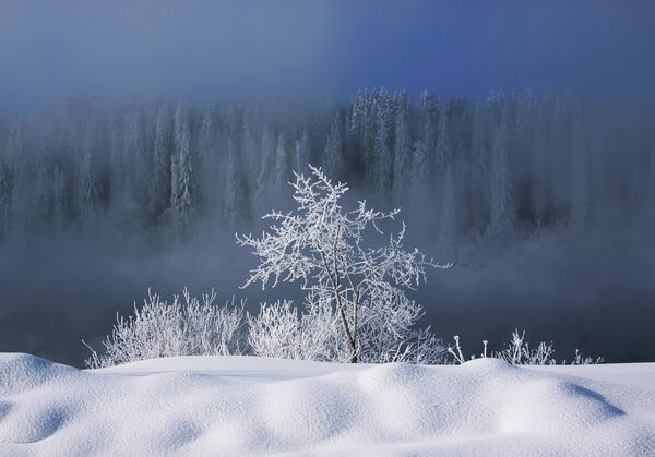 Tatiana Bolotowa: Zima nad rzeką Yayva - Sputnik Polska