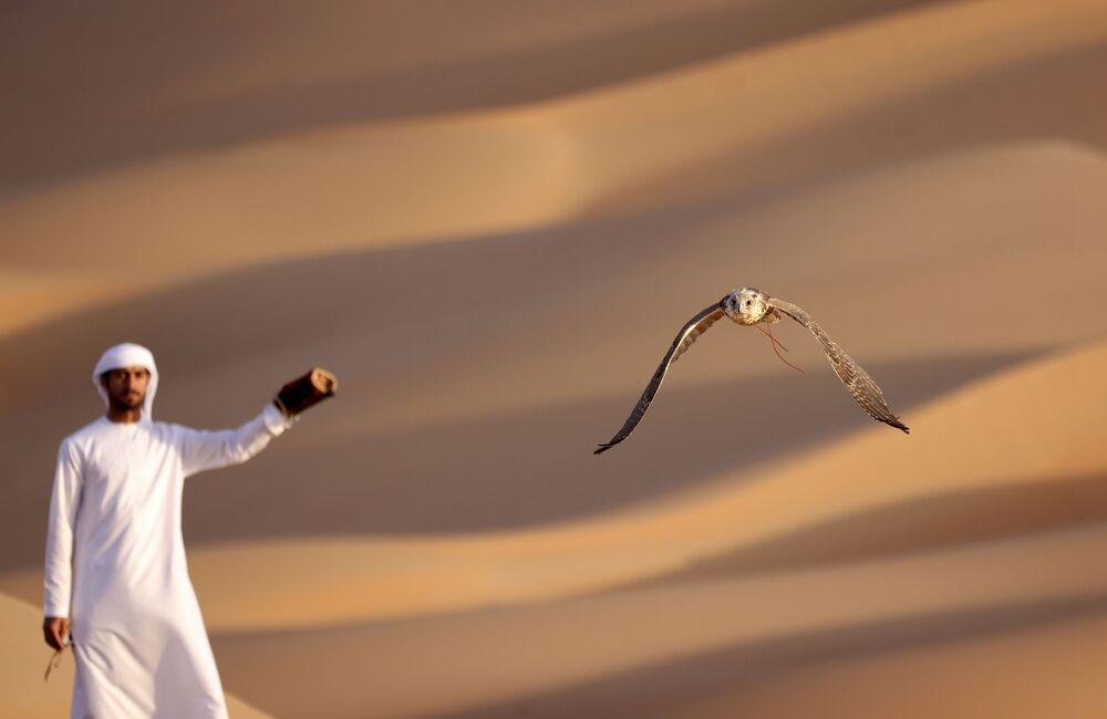 Ali Mansouri trenuje sokoła na pustyni Liwa