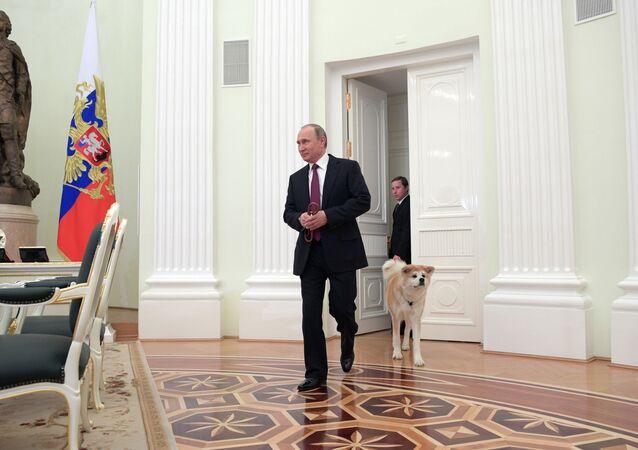 Prezydent Rosji Władimir Putin z psem Akita Inu w Kremlu