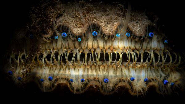 """The Eyes Have It"", autor: Thomas Gaitley - Sputnik Polska"