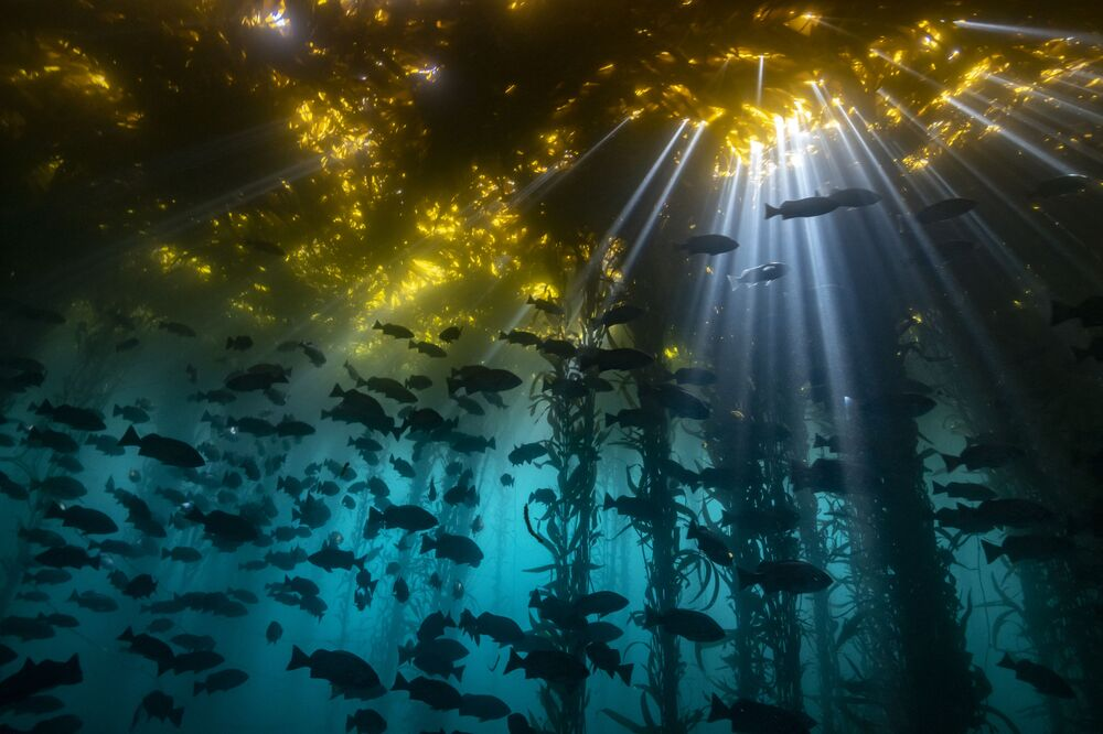"""""""Cathedral of Kelp"""", autor: Jon Anderson"""