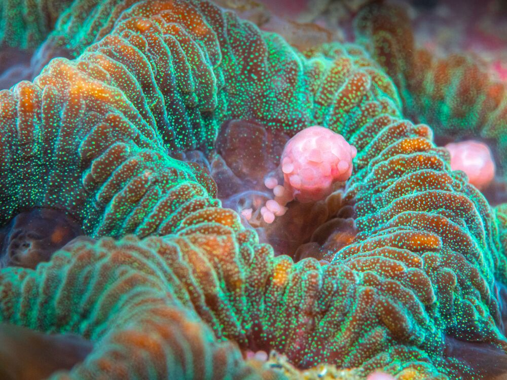 """""""Coral Spawning"""", autor: Chia Chi Chang"""