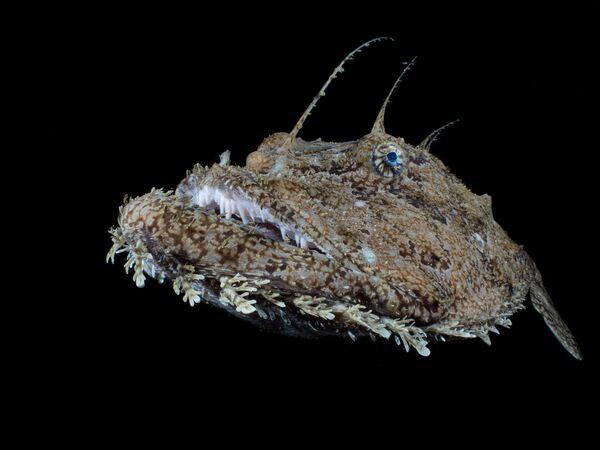 """""""Anglerfish"""", autor: Galice Hoarau - Sputnik Polska"""