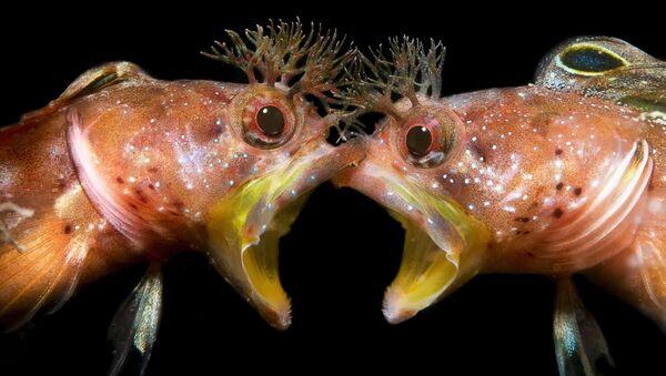 """Zdjęcie """"Twarzą w twarz"""" chińskiego fotografa Jing Gong Zhanga, który zajął drugie miejsce w kategorii Zachowanie konkursu The Underwater Photographer of the Year 2021 - Sputnik Polska"""