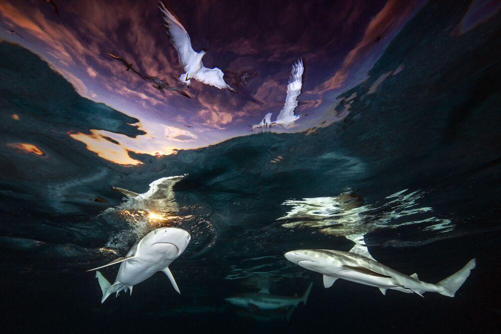 Zdjęcie autorstwa amerykańskiego fotografa Renee Capozzola, zwycięzcy kategorii Wide Angle w konkursie The Underwater Photographer of the Year 2021