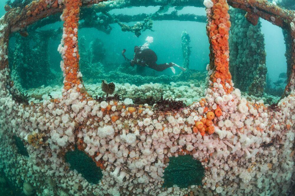 Zdjęcie brytyjskiego fotografa Kirsty Andrews zwycięzcy w kategorii British Waters Living Together konkursu The Underwater Photographer of the Year 2021