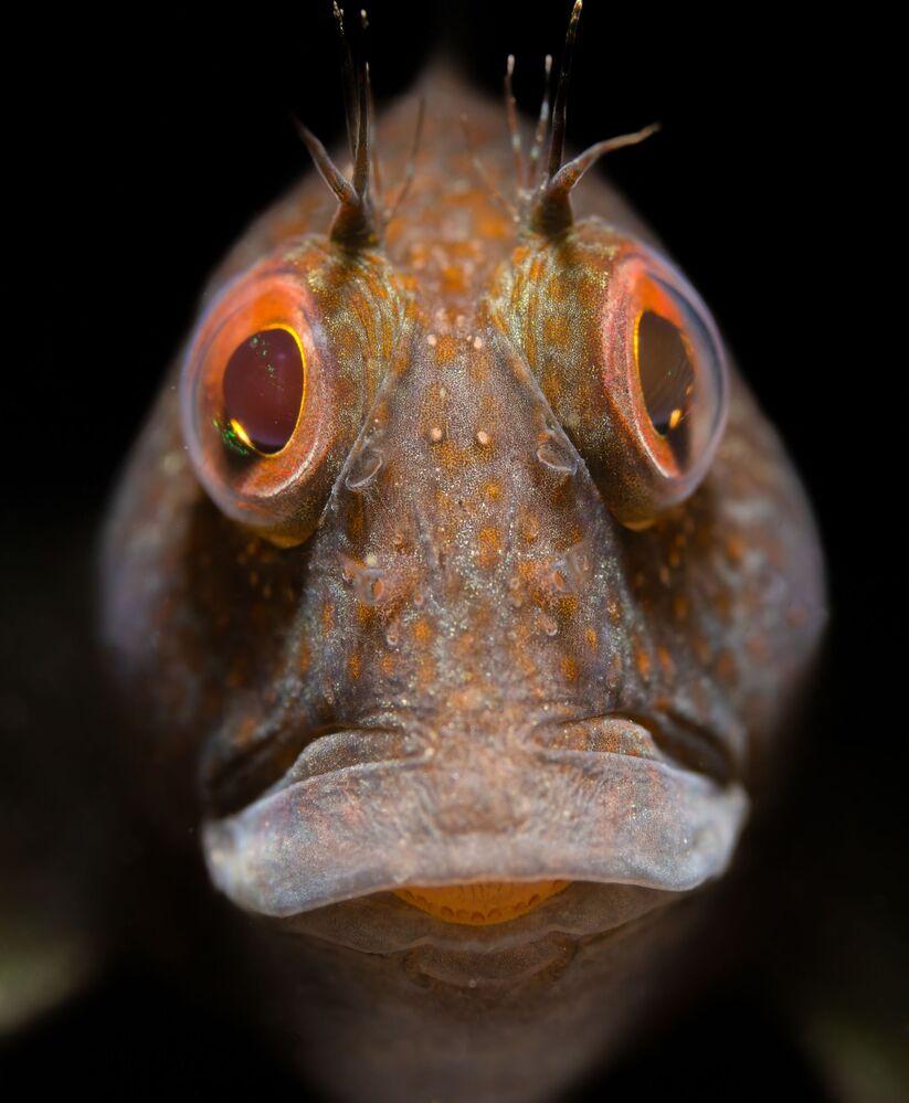 Zdjęcie brytyjskiego fotografa Malcolma Nimmo, zwycięzcy w kategorii British Waters Macro konkursu The Underwater Photographer of the Year 2021