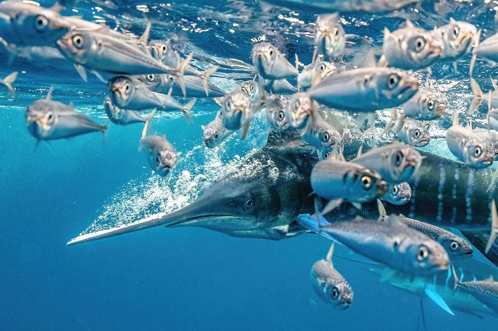 Zdjęcie amerykańskiego fotografa Karim Iliya, zwycięzcy w kategorii Behaviour konkursu The Underwater Photographer of the Year 2021