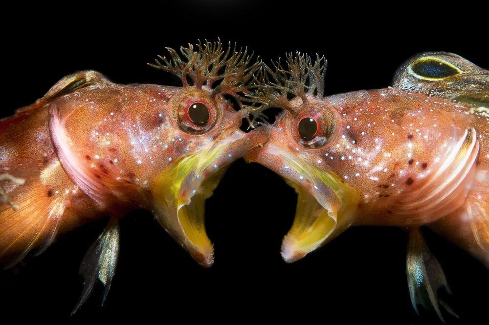 """Zdjęcie """"Twarzą w twarz"""" chińskiego fotografa Jing Gong Zhanga, który zajął drugie miejsce w kategorii Zachowanie konkursu The Underwater Photographer of the Year 2021"""