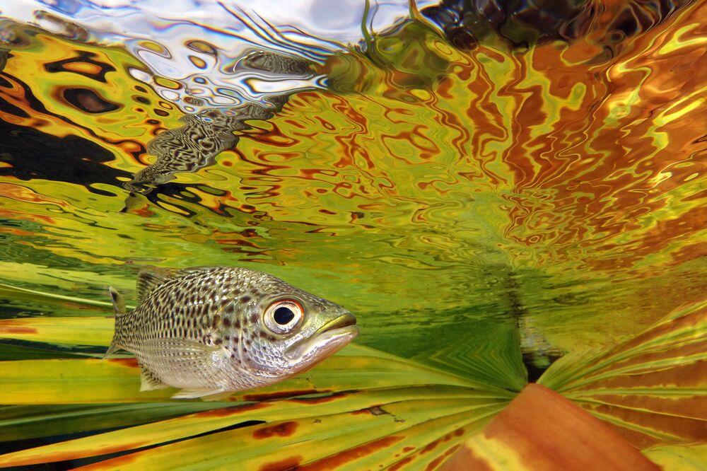 Zdjęcie fotografa z Nowej Kaledonii Jacka Berthomiera, który zwyciężył w kategorii Compact, konkursu The Underwater Photographer of the Year 2021