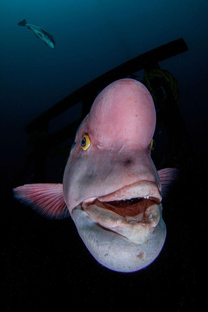 Zdjęcie japońskiego fotografa Ryohei Ito, który zwyciężył w kategorii Portrait  konkursu The Underwater Photographer of the Year 2021