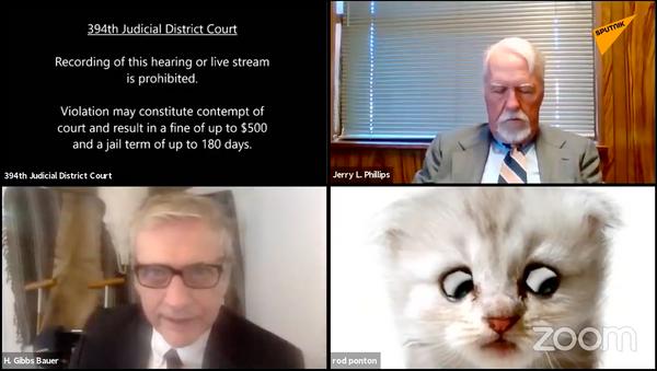 Prawnik z USA pojawił się w postaci kota podczas zdalnej rozprawy sądowej - Sputnik Polska