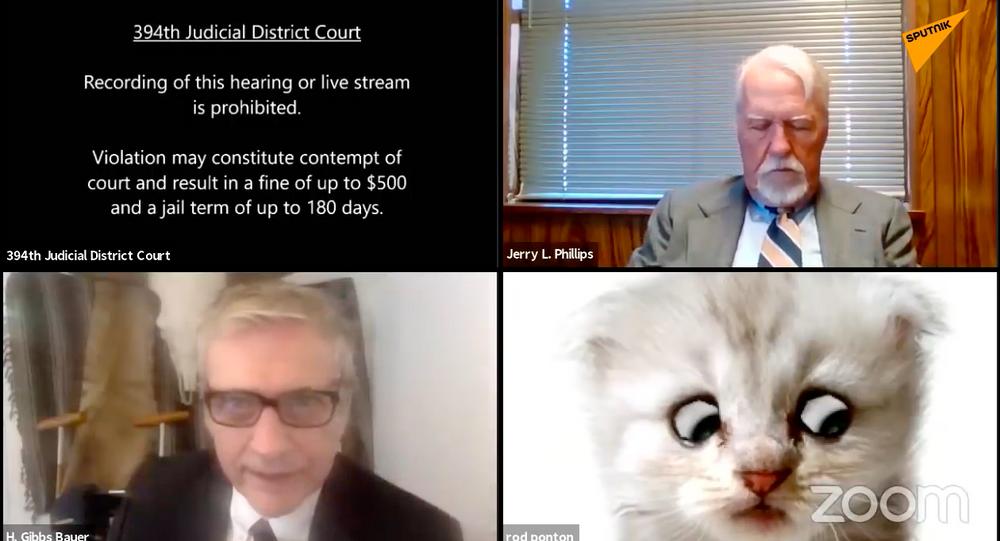 Prawnik z USA pojawił się w postaci kota podczas zdalnej rozprawy sądowej