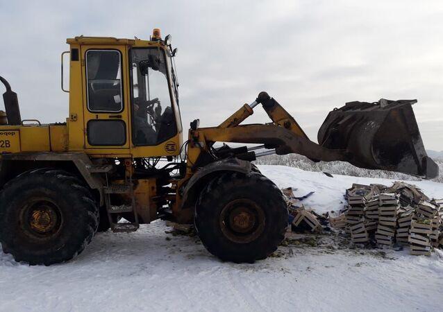 Pod Petersburgiem zniszczono ponad tonę polskich gruszek