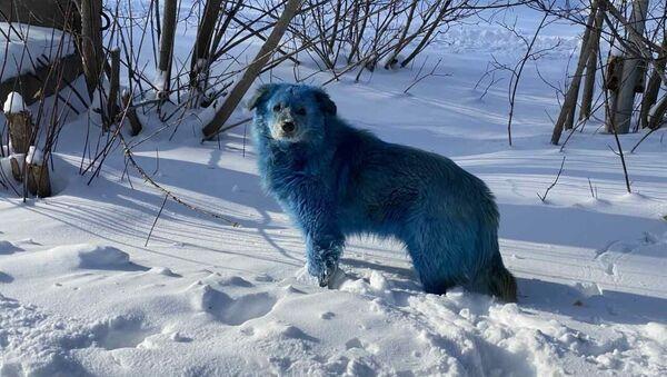 Błękitne psy na terenie przedsiębiorstwa chemicznego w Dzierżyńsku w obwodzie niżnonowogrodzkim - Sputnik Polska
