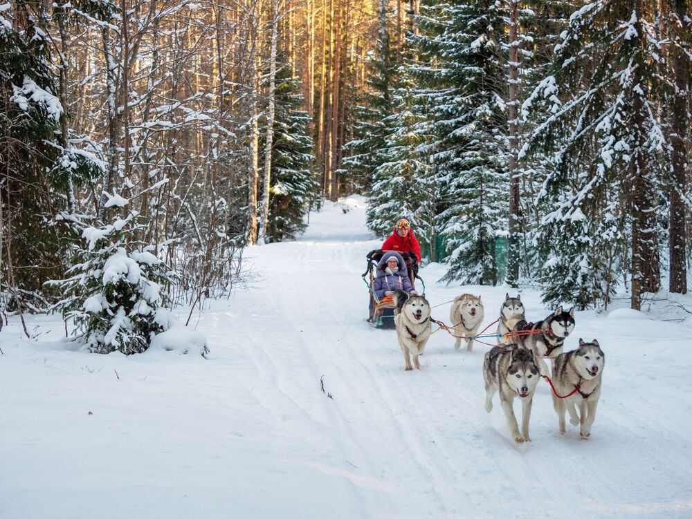 Turyści jeżdżą psim zaprzęgiem na terytorium «Karjala Park» w rejonie priażyńskim w Republice Karelii