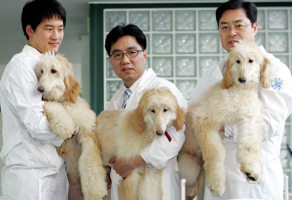 Sklonowane w Korei Południowej psy