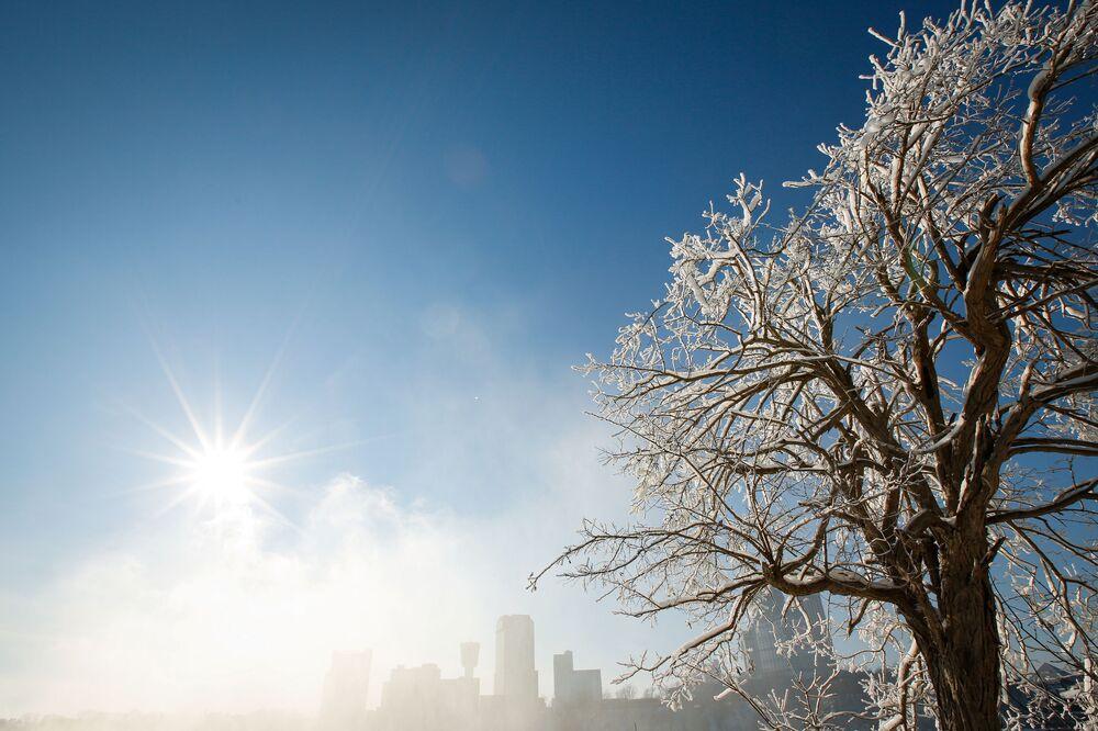 Pokryte lodem drzewa w mieście Niagara Falls w Nowym jorku