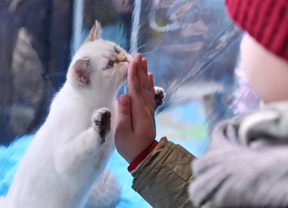 Odwiedzający wystawę kotów w Moskwie