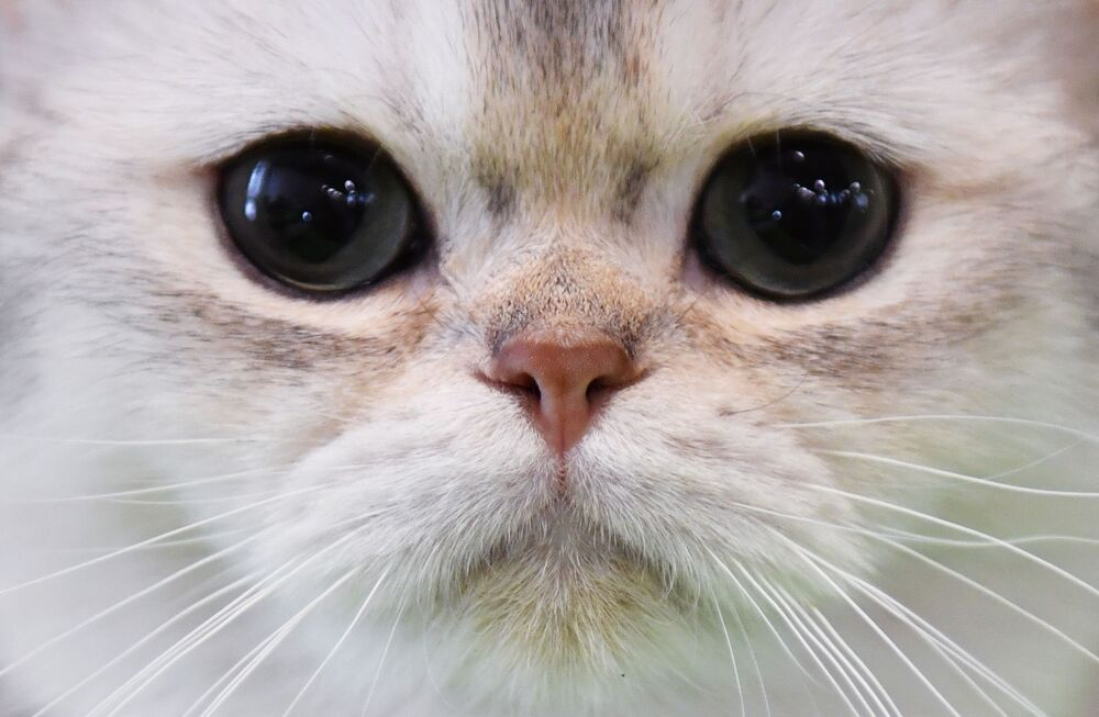 Kotek na wystawie w Moskwie