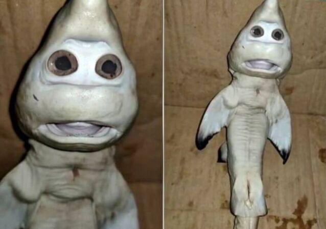 Rekin z ludzką twarzą