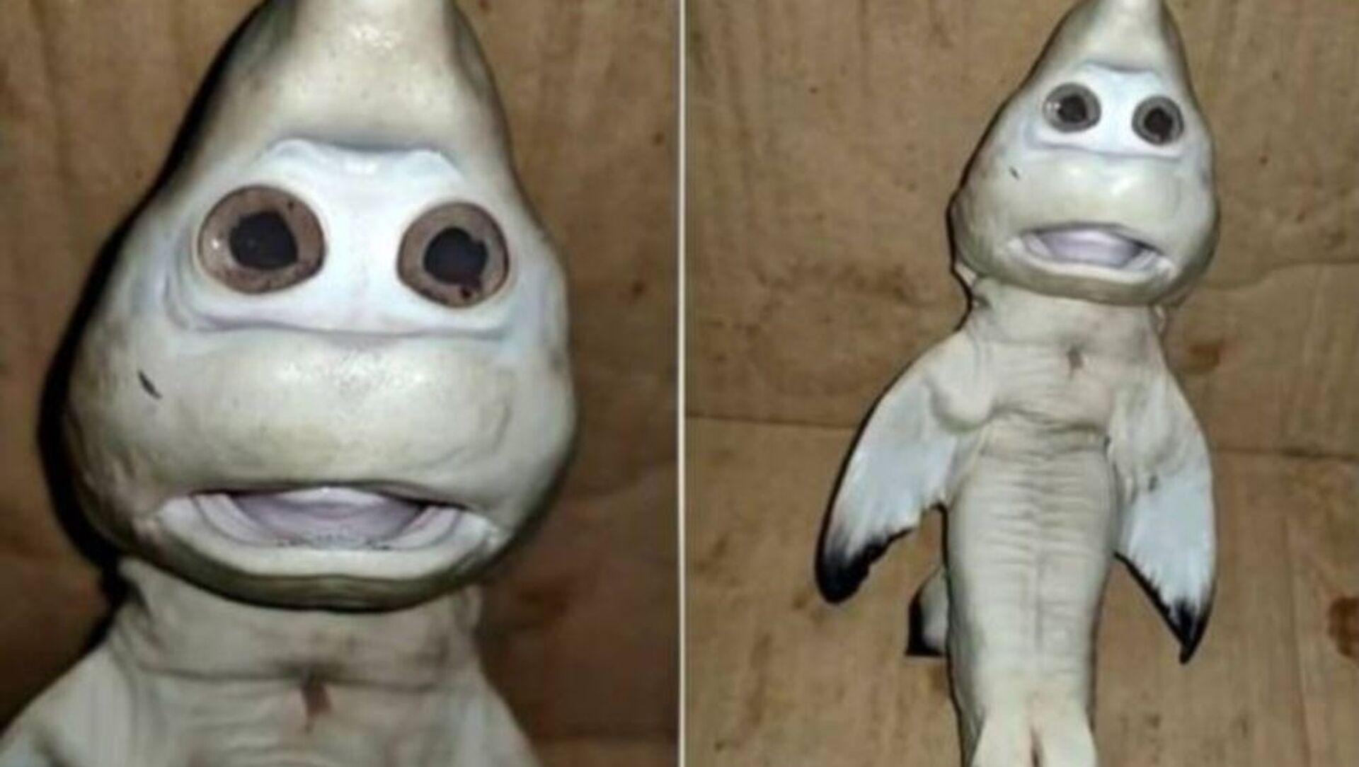 Rekin z ludzką twarzą - Sputnik Polska, 1920, 27.02.2021