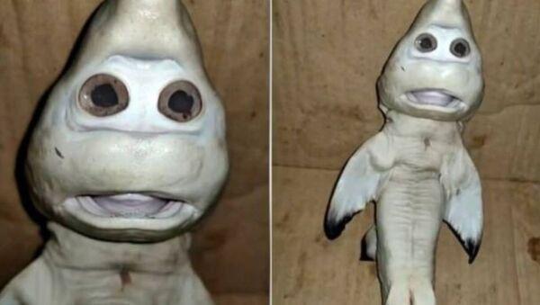 Rekin z ludzką twarzą - Sputnik Polska