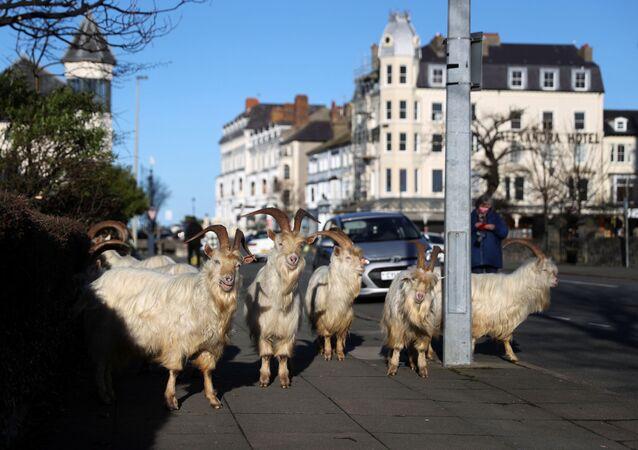 Kozy w opustoszałym mieście Llandudno w Walii