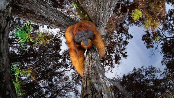 Zdjęcie The World Is Going Upside Down, fotograf: Thomas Vijayan z Kanady - Sputnik Polska
