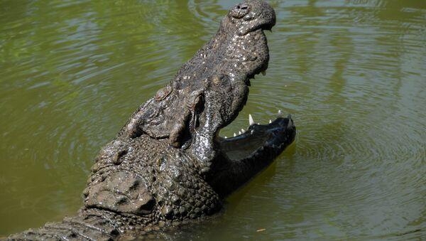 Krokodyl. - Sputnik Polska