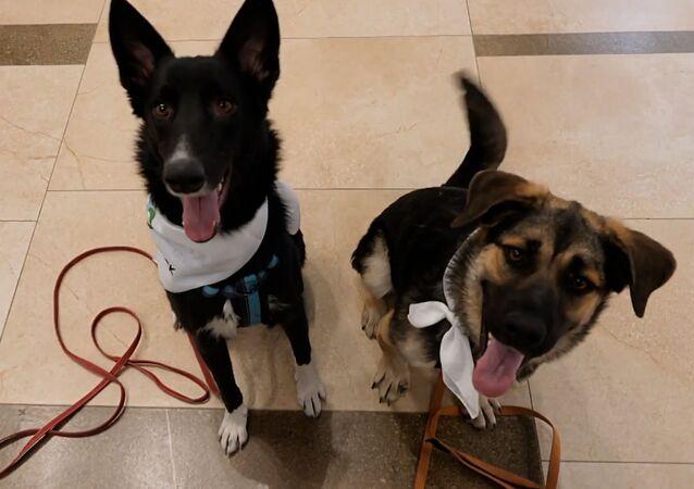 Psy na lotnisku
