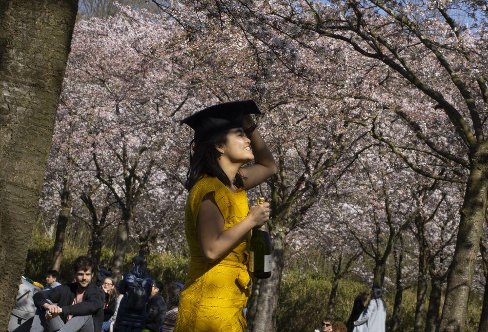 Kwitnienie wiśni w Amsterdamie