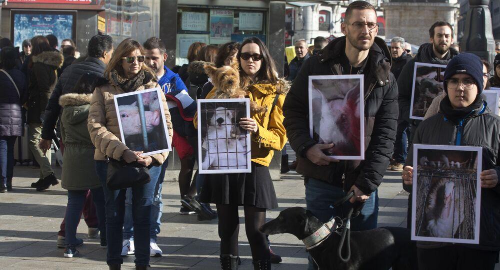 Akcja obrońców praw zwierząt w Madrycie, Fotografia archiwalna