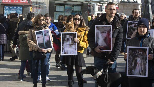 Akcja obrońców praw zwierząt w Madrycie, Fotografia archiwalna - Sputnik Polska