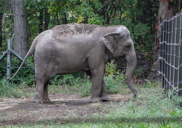 Słonica Happy.