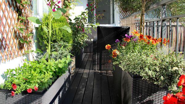 Rośliny balkonowe - Sputnik Polska