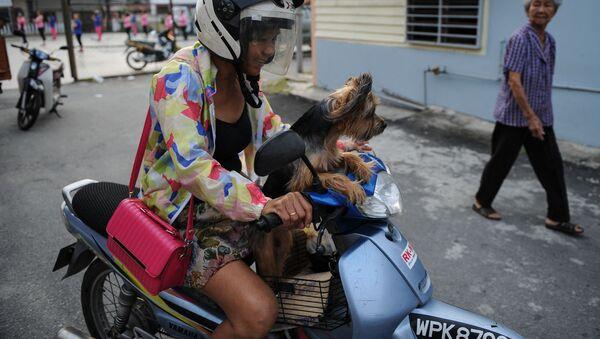 Mieszkanka Malezji ze swoim psem - Sputnik Polska