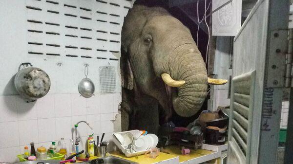 Пробивший стену жилого дома слон в Таиланде - Sputnik Polska