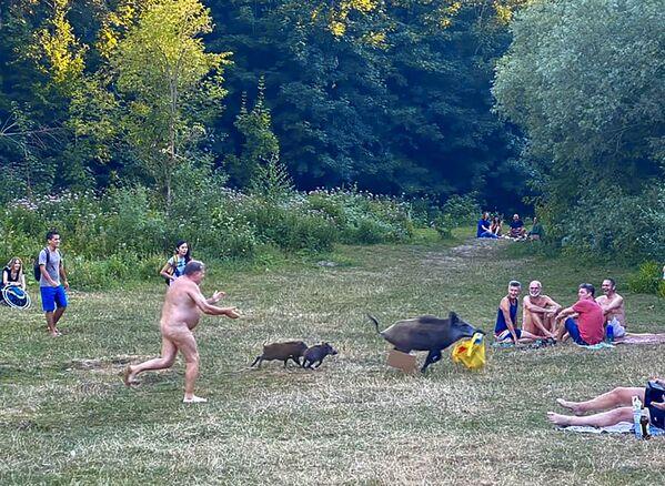 W Berlinie na plaży dzik ukradł nudyście torbę z laptopem. - Sputnik Polska