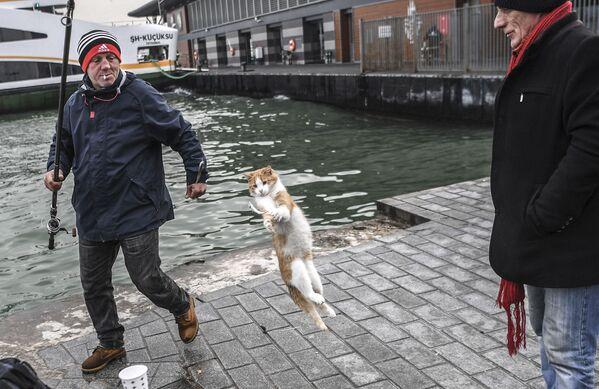 "Kot ""poluje"" na rybę w Stambule. - Sputnik Polska"