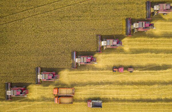 """To zdjęcie zostało zrobione w regionie Lipiecka. """"Kombajny zbierają pszenicę na szerokim polu. Ustawiły się po przekątnej, aby nie przeszkadzały sobie nawzajem"""" – zauważył fotograf Igor Kljakhin. """"W ten sposób nie przegapią ani jednego kłoska"""". - Sputnik Polska"""